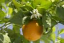 Consuma diariamente quantidade suficiente de vitamina C
