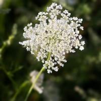 Mil-folhas