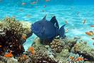 Remédio para queimaduras causadas por coral uso
