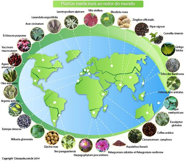 Plantas medicinais ao redor do mundo