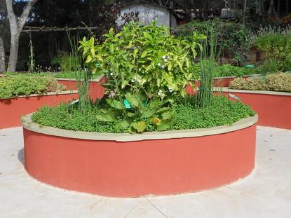 Plantas medicinais que podem ser vistas no jardim sensorial