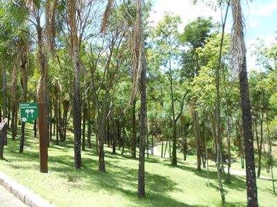 Jardim Botânico de Jundiaí palmeiras