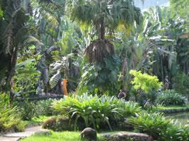 Fotos do Jardim Botânico do Rio de Janeiro