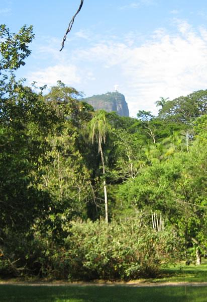 Jardim Botânico Rio de Janeiro  plantas medicinais  Criasaude