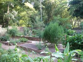 jardim Plantas Medicinais Rio de Janeiro
