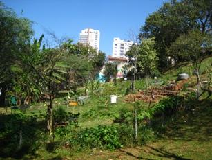 Cultivo de plantas medicinais em hortas comunit rias for Wavre jardin urbain 2015