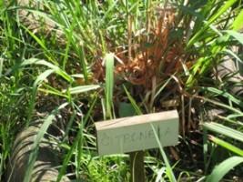 Cultivo de plantas medicinais em hortas comunitárias urbanas