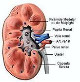 Insuficiência renal resumo