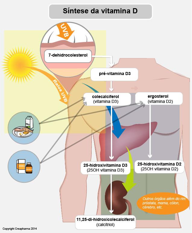 síntese de vitamina D