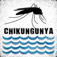 Entenda melhor o que é a febre chikungunya, de acordo com os estudos mais recentes